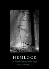 Hemlock – A Forest Giant on the Edge - Yale Scholarship Online